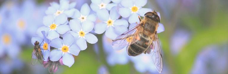 help de bijen blog