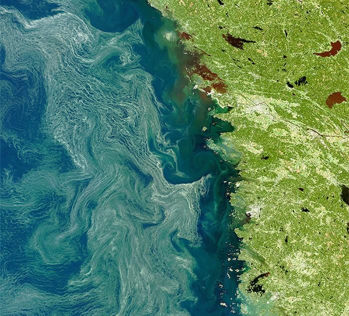 algen baltische zee