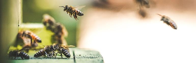 bijen biologosch eten blog