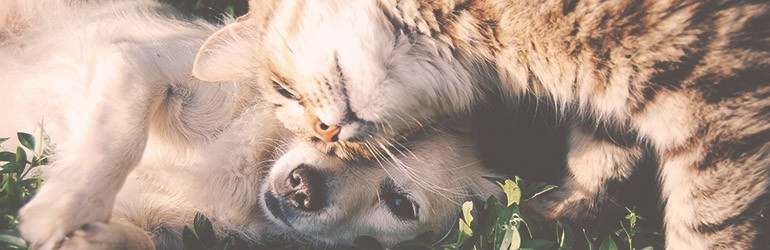 huisdieren milieuvriendelijk blog