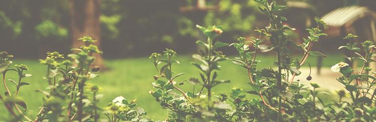 thuisblijven natuur is dichterbij blog