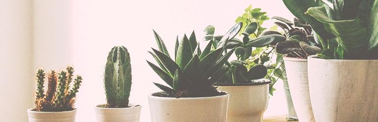 planten verzorgen blog
