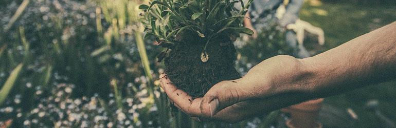 de onderwereld van de tuin blog