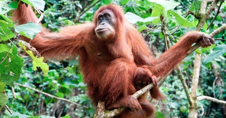 blog palmolie duurzaam
