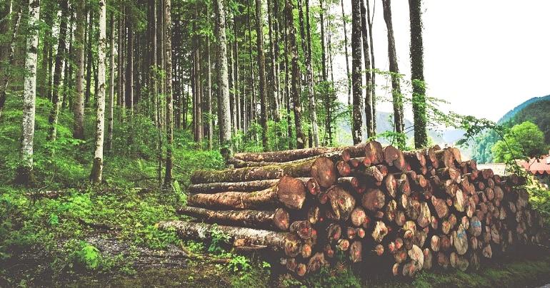 De 4 redenen waarom bomenkap voor papier moet stoppen