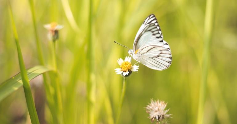 afname vlinder blog