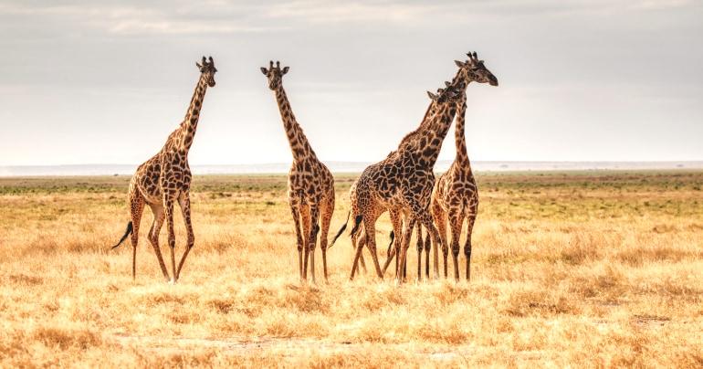 duurzaam reizen safari kenia