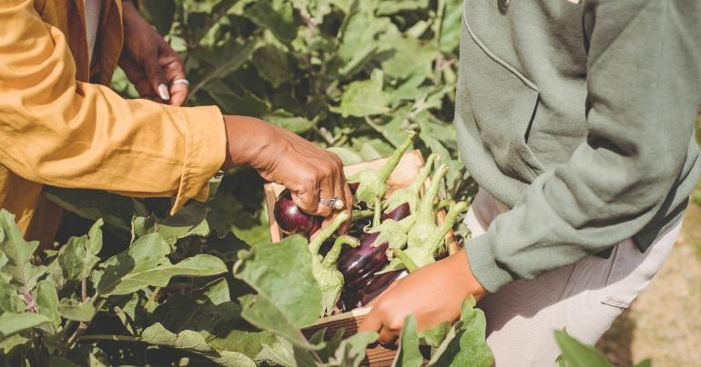 fairtrade producten waarom