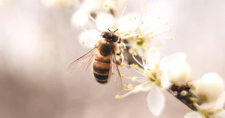 bijensterfte door gebruik pesticiden blog
